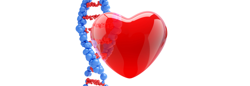 Graphic image of pictographic heart in front of a DNA double-helix.