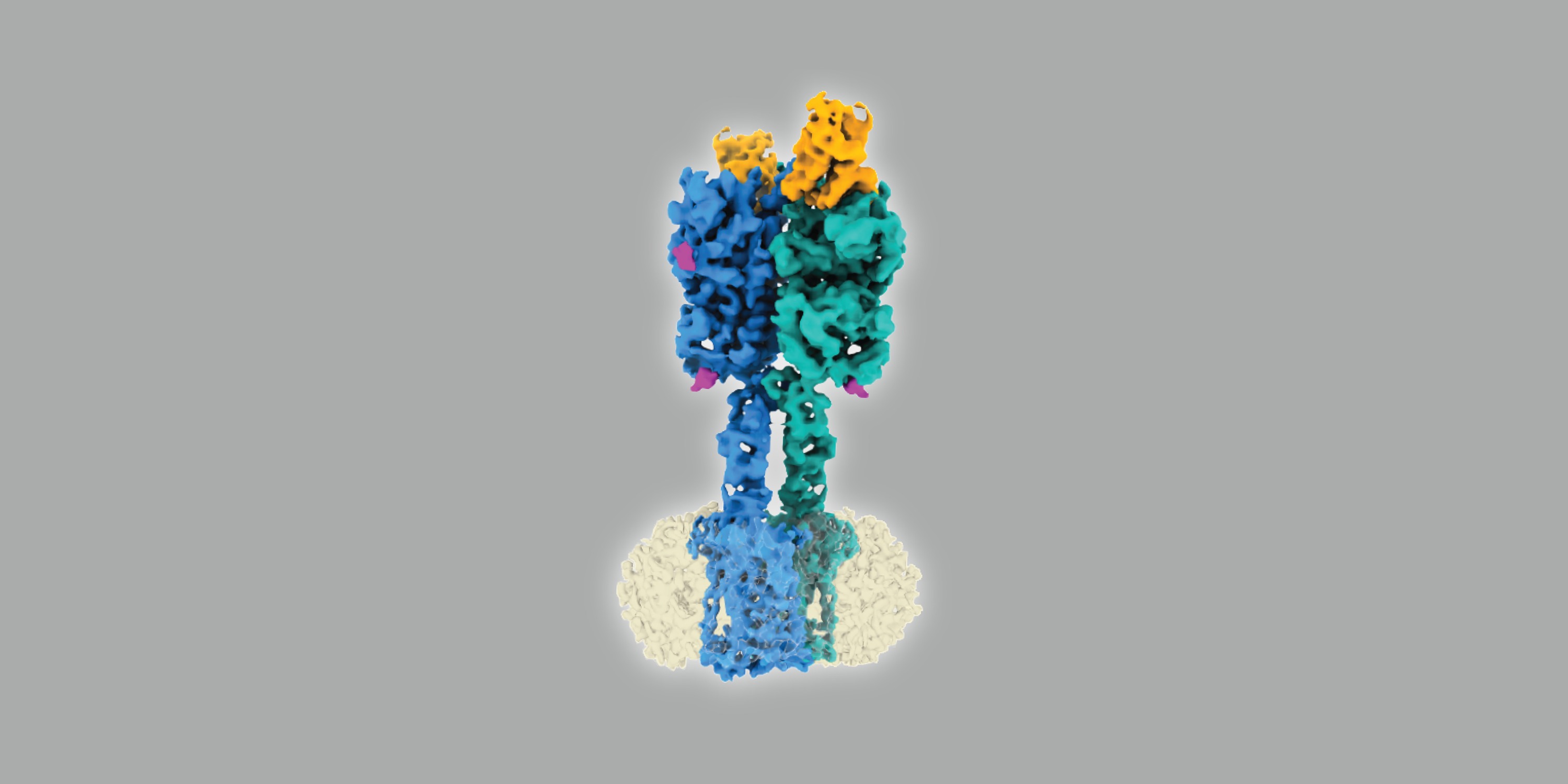 Graphic image of a CryoEM reconstruction of a protein in different colors, on a gray background