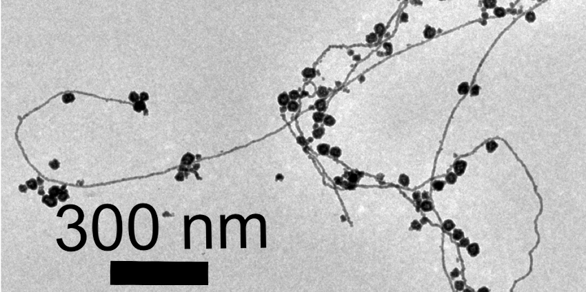 Image of gold nanorods, which show twisting lines with dark dots.