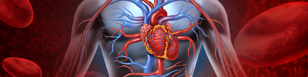 Precursor cells discovered that could help regrow heart arteries ...