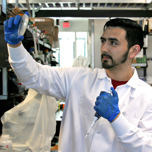 Photo of undergraduate student Anthony Flores in the lab, with a pipette in one hand and a petri dish in the other, looking up at the contents of the dish.