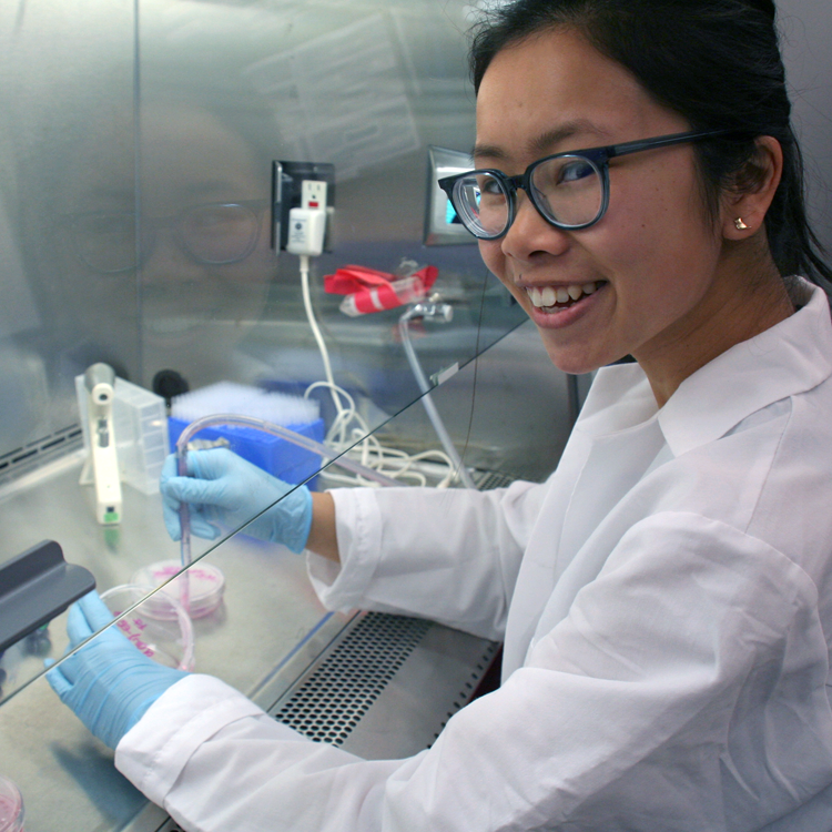 Photo of USRP student Cindy Nguyen in the laboratory, working with cell dishes inside a fume hood.