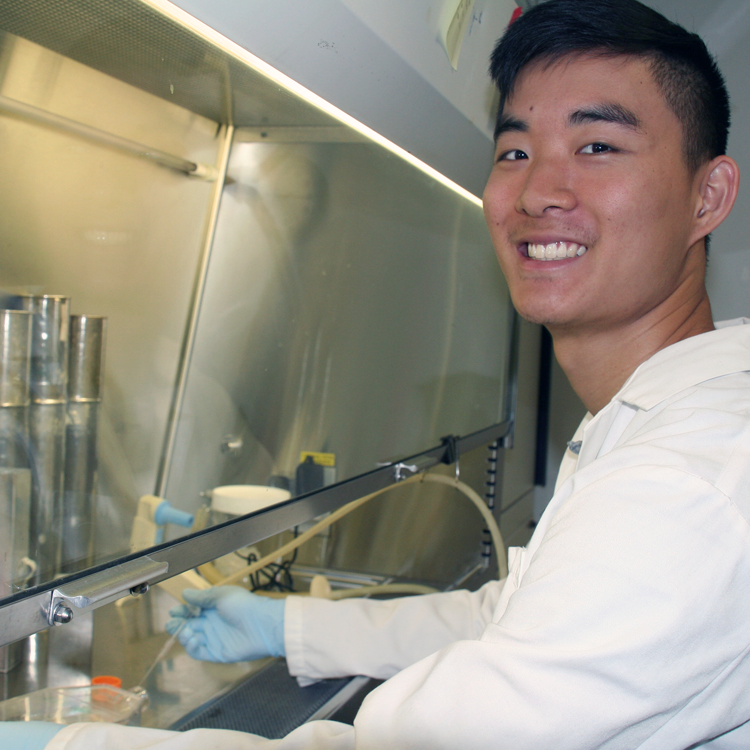 Photo of USRP student Jonathan Wang in the laboratory, working in a fume hood.