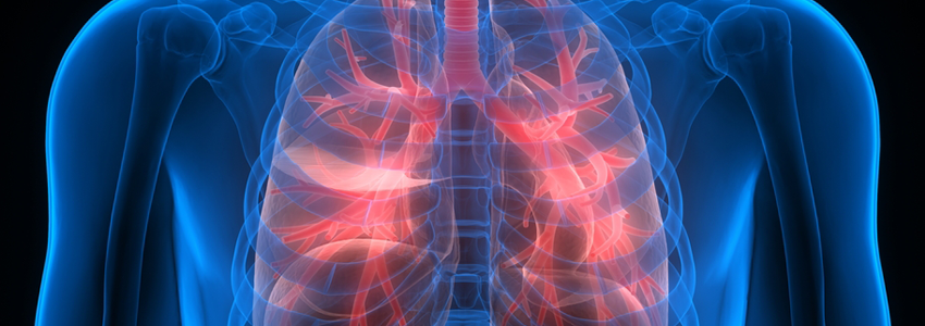 Graphic anatomical image showing lungs lit up in red.