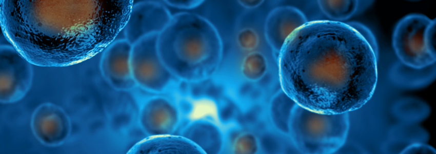 Graphic illustration depicting stem cells in blue with their nuclei in orange.