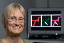 Photo of Dr. Katrin Andreasson in front of a computer monitor screen showing brain images.