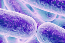 Graphic image of cylindrical bacteria depicted in purple.