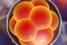 Graphic image of cells.