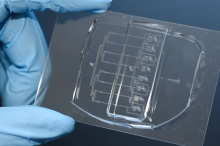 Photo of a researcher wearing blue glove holding up the microfluidic guilltone, which is smaller than a credit card and transparent, with numerous tiny channels.