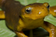 Photo of a newt.