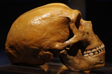 Photo of a humanoid skull resting on a table.