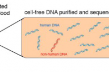 Graphical abstract from Dr. Quake's publication in Cell.