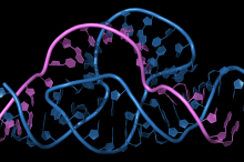 Graphic illustration of intertwined strands of blue and purple DNA and RNA with mutliple curves and contortions.