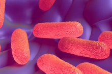 Graphic image showing pink salmonella bacteria against purple background.