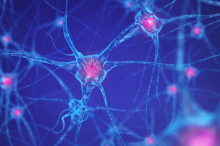 Graphic image of interconnected neurons, with nuclei in pink on a blue background.