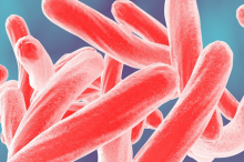 Graphic image of tuberculosis bacteria depicted in red in front of a bluish background.