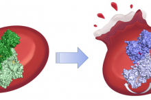 Graphic illustration showing a protein in green on the left, in one conformation, with a regular red blood cell behind it; and showing the same protein in a different conformation on the right in purple, with the blood cell behind it rupturing.