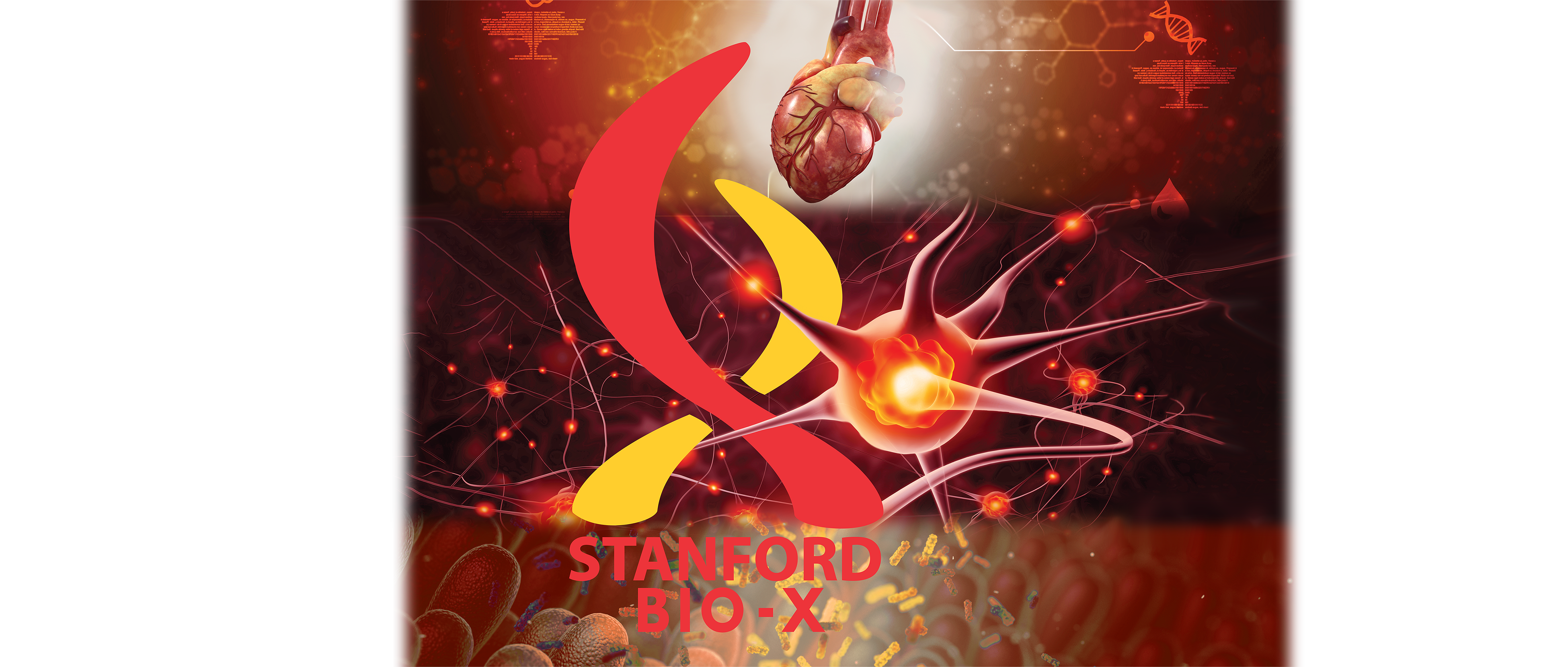 Graphic image background consisting of a realistic heart, a neuron, and gut bacteria, with the Stanford Bio-X logo on top.